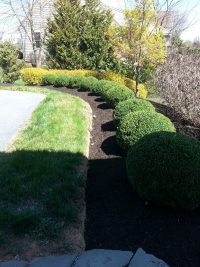 row of bushes